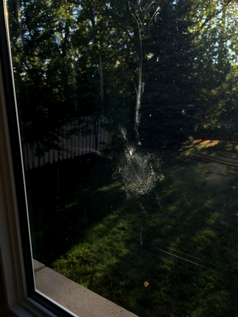 The impact of a Mourning Dove on our new window …