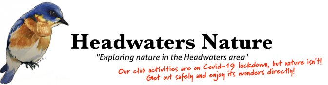 Headwaters Nature